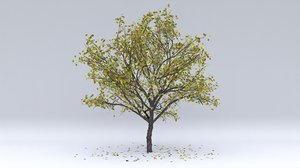 3D pear autumn hight