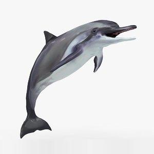 dolphin l931 3D model