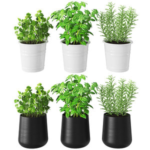 3D set herbs kitchen model