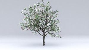 3D malus flowers hight model