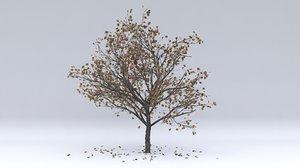 malus autumn hight 3D model