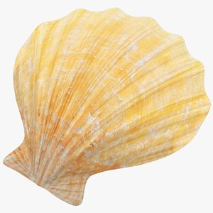 seashell real 3D