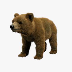 bear ornatrix zbrush 3D model