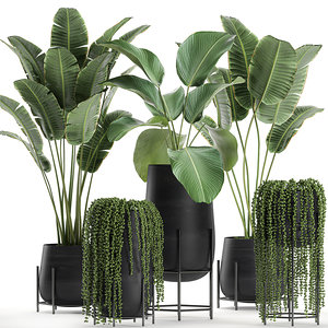 3D model plant black houseplants