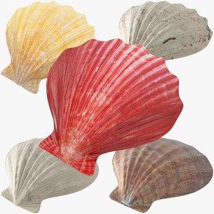 3D seashells v1