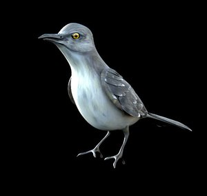 3D mocking bird mockingbird