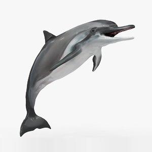 3D model dolphin l934
