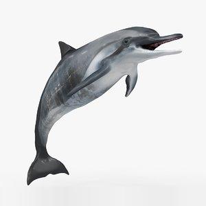 3D dolphin l936