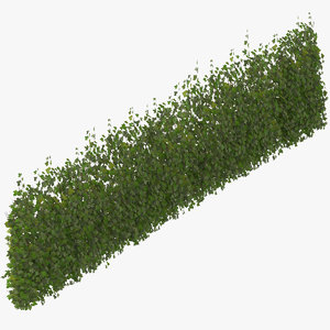 ivy patch 10x2 5m 3D