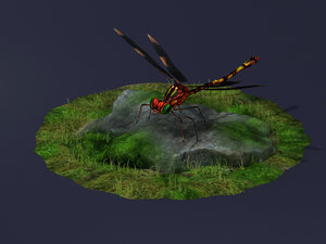 3D model dragonflies ants beneficial insects