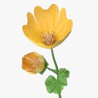 Yellow Malva Flower