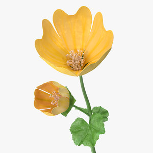 3D yellow malva flower