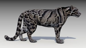 clouded leopard 3D