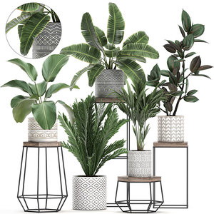 3D plant pots houseplants model