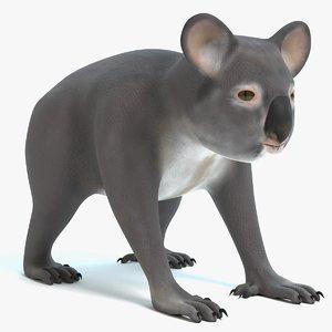 3D koala animal mammal model