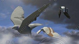 flock birds pigeons rigged 3D model