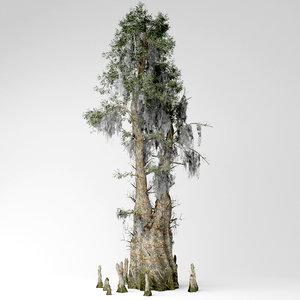 3D model bald cypress tree