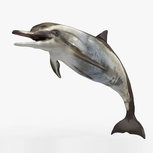 dolphin rigged 3D model