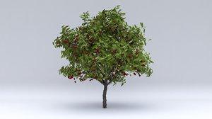 3D model cherry laurel fruits
