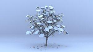 3D cherry laurel winter