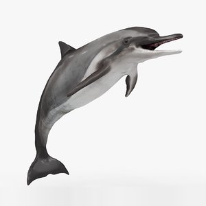 3D dolphin rigged