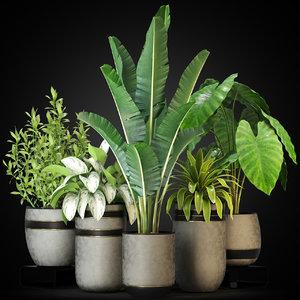 plants 270 3D model