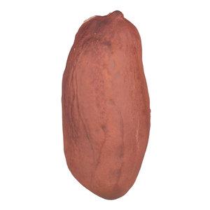 scanned peanut kernel 3D model
