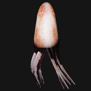 squid animals 3D model