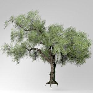 live oak tree model