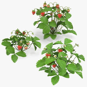 3D model bush strawberry plant fruits