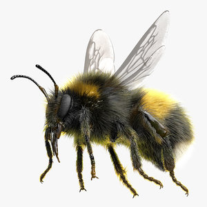 3D white-tailed bumblebee rig model