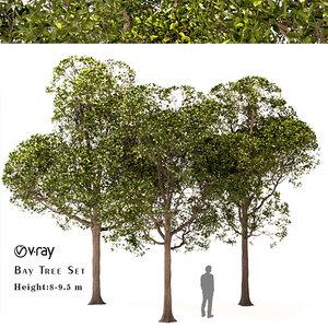 bay trees 3D