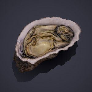 oyster model