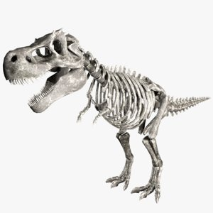 3D t-rex skeleton animations
