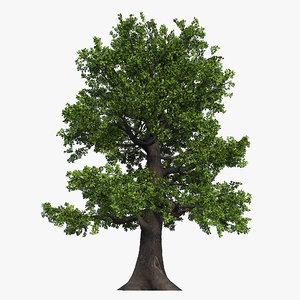 3D oak tree 01 model