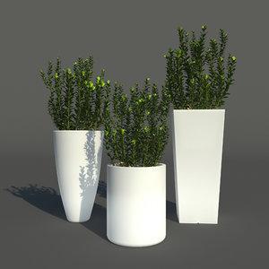 young boxwood led flowerpot model
