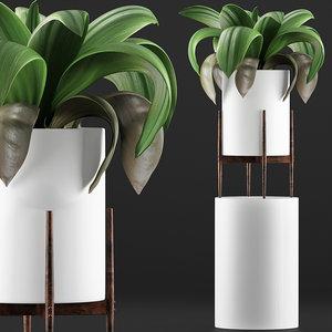 exotic plants trees model