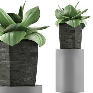 3D exotic plants trees model