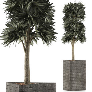exotic plants trees 3D model