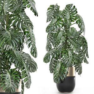 3D plants interior monstera
