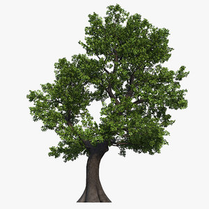3D oak tree 02 model