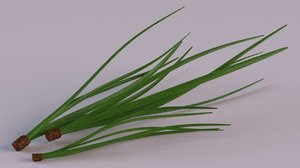 cedar needles pine model
