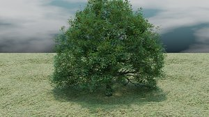 oak tree model