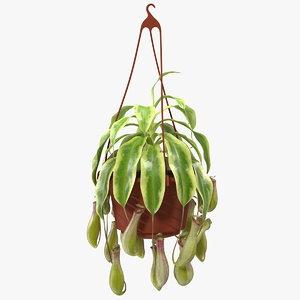 pitcher plant hanging pot 3D