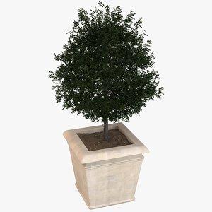 decorative pot plant 3D model