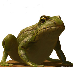 frog animations 3D model