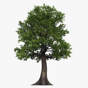 oak tree 03 3D model