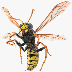 3D wasp attack pose fur