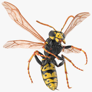 wasp attacking pose 3D model