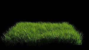 3D ornamental grass realistic model